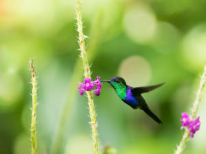 IG-colibri-3367