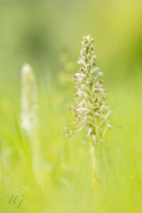 IG-orchidee-9551