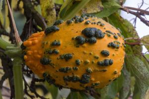 potager-chatel-10-2017-7392