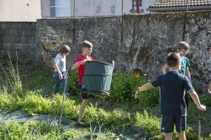 jardin-jeune-pousse-6-17-5125
