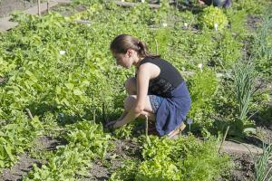 jardin-jeune-pousse-6-17-5127