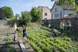 jardin-jeune-pousse-6-17-5131