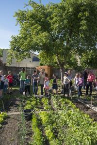 jardin-jeune-pousse-6-17-5160